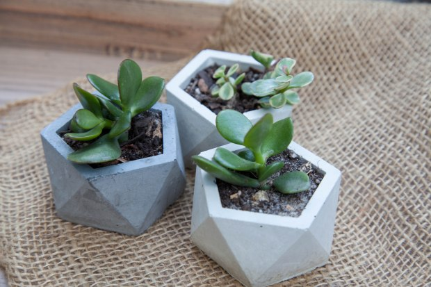 Small Geo Planters- Display (1 of 1)